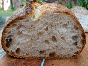 norwich sourdough crumb