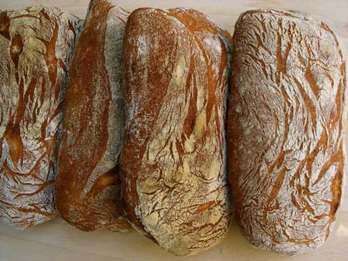 Ciabatta Loaves