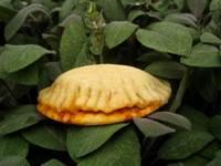 BBB Tuniian Spicy Breads