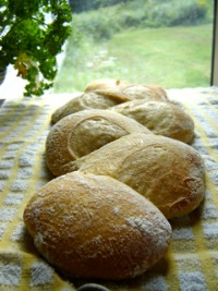 Crusty Sourdough Épis de Blé
