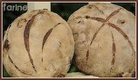 Cranberry-Hazelnut Whole Wheat Bread