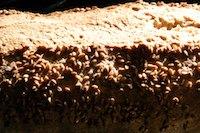 Sourdough peasant loaf