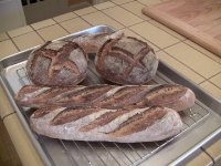 Country Sourdough Baguettes and Boules