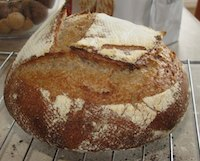 Stone Ground Whole Wheat sourdough