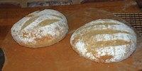 Semolina Potato Barley Sourdough Bread