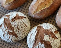 Rye - Polenta and Norwich Sourdoughs