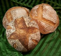 Pain au Levain with Mixed Starters