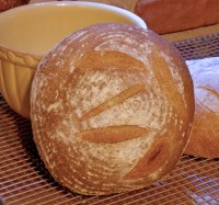 Sourdough Corn-Barley Bread