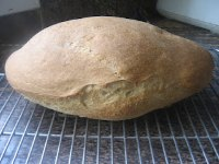 Barley-Wheat Batard
