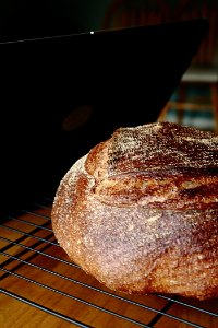 Whole Wheat Sourdough Boule