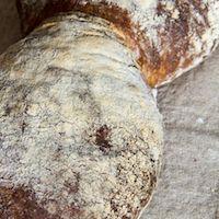 Basel Bread