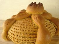 Pan De Muerto Cactus (Bread Of The Dead Cactus)