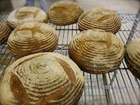 Vermont Grains Bread (with Yeast)