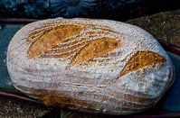 Durum Tangzhong Sourdough Act II