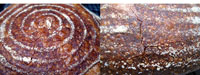 Sourdough bread: 2 more experiments