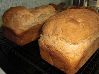 gluten-free, dairy-free and egg-free bread
